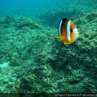 屏東縣休閒旅遊 運動休閒 水上活動 琉球夯浮潛 照片