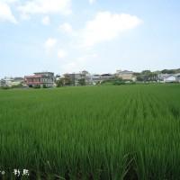 苗栗縣休閒旅遊 景點 景點其他 苑裡山腳社區彩繪稻田 照片