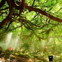 苗栗縣休閒旅遊 景點 景點其他 百年榕樹土地公 照片