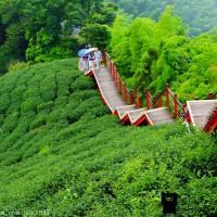 嘉義縣休閒旅遊 景點 觀光茶園 龍眼村休閒步道 照片