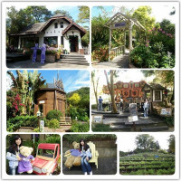 台中市休閒旅遊 景點 觀光花園 薰衣草森林 照片