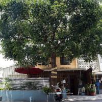 台中市美食 餐廳 咖啡、茶 咖啡、茶其他 吉玉咖啡 照片