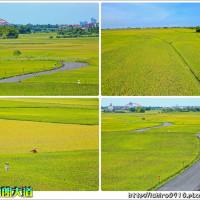 宜蘭縣休閒旅遊 景點 觀光農場 宜蘭三奇村伯朗大道 照片