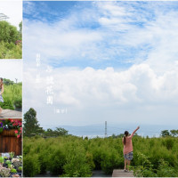 南投縣休閒旅遊 景點 觀光花園 29號花園 照片