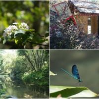 苗栗縣休閒旅遊 景點 景點其他 四十二份湧泉 照片