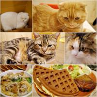 高雄市美食 餐廳 咖啡、茶 逗貓趣Funny Cat 照片
