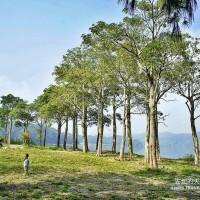 苗栗縣休閒旅遊 景點 觀光農場 明德水庫魯冰花農莊 照片