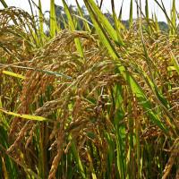 苗栗縣休閒旅遊 景點 觀光農場 幸福有機農園 照片