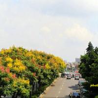 新北市休閒旅遊 景點 景點其他 麗林國小 照片