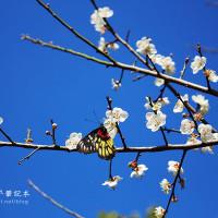 桃園市休閒旅遊 景點 公園 角板山公園 照片