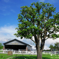 雲林縣休閒旅遊 景點 觀光農場 千巧谷牛樂園牧場 照片