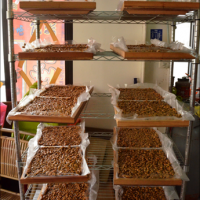 台南市美食 攤販 台式小吃 阿麗花生糖 照片