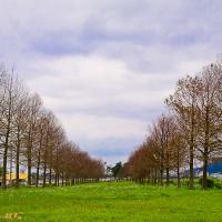 宜蘭縣休閒旅遊 景點 公園 台七丙櫻花林 照片