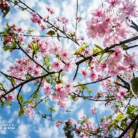 台中市休閒旅遊 景點 觀光花園 威立機電賞櫻步道 照片
