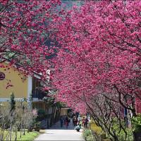 南投縣休閒旅遊 住宿 觀光飯店 埔里箱根生活館 Hakoune Onsen 照片