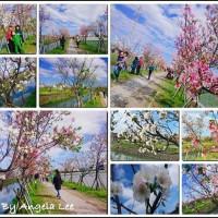 宜蘭縣休閒旅遊 景點 公園 羅莊櫻花步道 照片