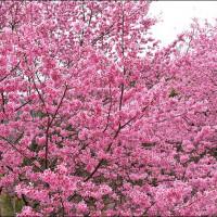 新竹縣休閒旅遊 景點 觀光花園 萬里山園 照片