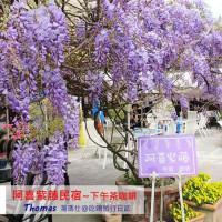 嘉義縣休閒旅遊 住宿 民宿 阿喜紫藤民宿 照片