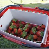 花蓮縣休閒旅遊 景點 觀光果園 親親果園(親親草莓園) 照片