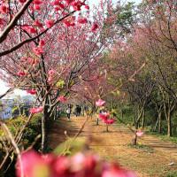 苗栗縣休閒旅遊 景點 公園 銅鑼環保公園 照片