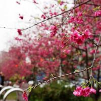台中市休閒旅遊 景點 公園 崇德榕園 照片