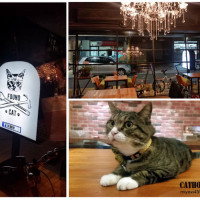台北市美食 餐廳 異國料理 找 貓咪 Found Cat cafe &bar 照片