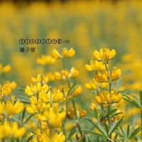 台北市休閒旅遊 運動休閒 運動休閒其他 貓空樟樹步道 照片