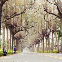 屏東縣休閒旅遊 景點 景點其他 泗林綠色隧道 照片