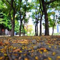 新北市休閒旅遊 景點 景點其他 臺北大學(三峽校區) 照片