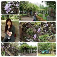 桃園市休閒旅遊 景點 公園 龍德公園 照片
