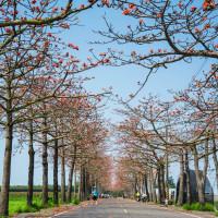 台南市休閒旅遊 景點 觀光花園 木棉花大道 照片