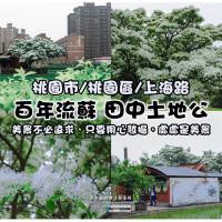 桃園市休閒旅遊 景點 景點其他 百年流蘇田中土地公 照片