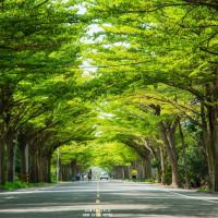 台南市休閒旅遊 景點 景點其他 學甲綠色隧道 照片