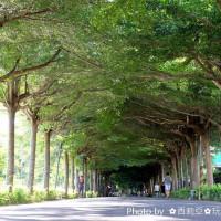 屏東縣休閒旅遊 景點 景點其他 泗林健走步道(綠色隧道) 照片
