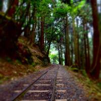 嘉義縣休閒旅遊 景點 景點其他 特富野古道 照片