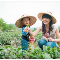 宜蘭縣休閒旅遊 景點 觀光茶園 綠野茶園 照片