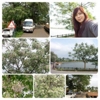 桃園市休閒旅遊 景點 景點其他 霄裡大池 照片