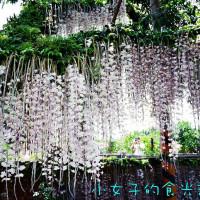 台南市休閒旅遊 景點 觀光花園 石斛蘭 瀑布花海 照片