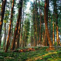 台中市休閒旅遊 景點 公園 九天森林 照片