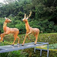 新竹縣休閒旅遊 景點 觀光果園 鹿寮坑段木香菇農場 照片
