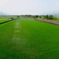 花蓮縣休閒旅遊 景點 景點其他 玉里鎮觀音里高寮 照片