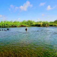 彰化縣休閒旅遊 景點 景點其他 竹塘水路溼地 照片