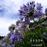 南投縣休閒旅遊 景點 景點其他 清境彩虹露營區 照片