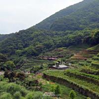 台北市休閒旅遊 景點 觀光花園 陽明山竹仔湖-繡球花田 照片