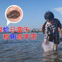 台南市休閒旅遊 景點 海邊港口 七股海鮮節-觀光赤嘴園暨挖文蛤體驗 照片