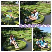 桃園市休閒旅遊 景點 觀光農場 康莊蓮園 照片