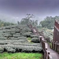 嘉義縣休閒旅遊 景點 森林遊樂區 太興岩步道 照片