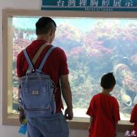 台東縣休閒旅遊 景點 觀光魚場 小丑魚主題館 照片