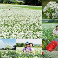 桃園市休閒旅遊 景點 景點其他 中新里韭菜生長專業區 照片