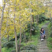 南投縣休閒旅遊 景點 觀光茶園 武岫農場 照片